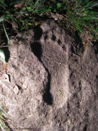 Footprints have formed in stone from woods in the middle parts of